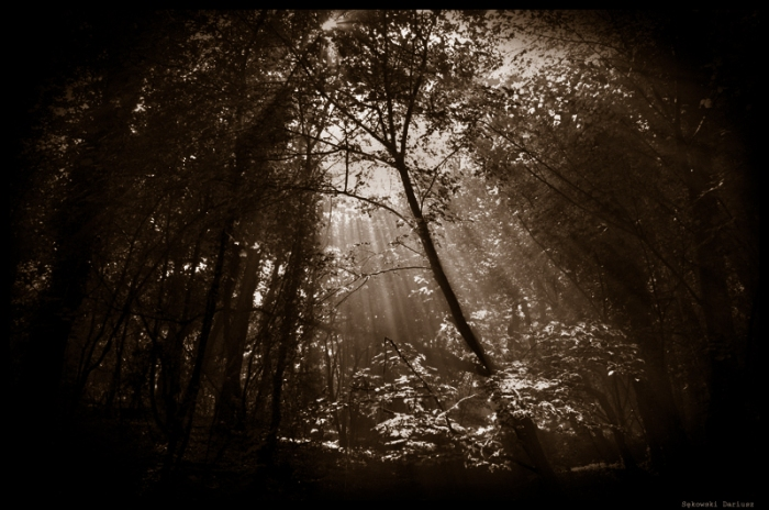 Forest by gazo via DeviantArt.com
